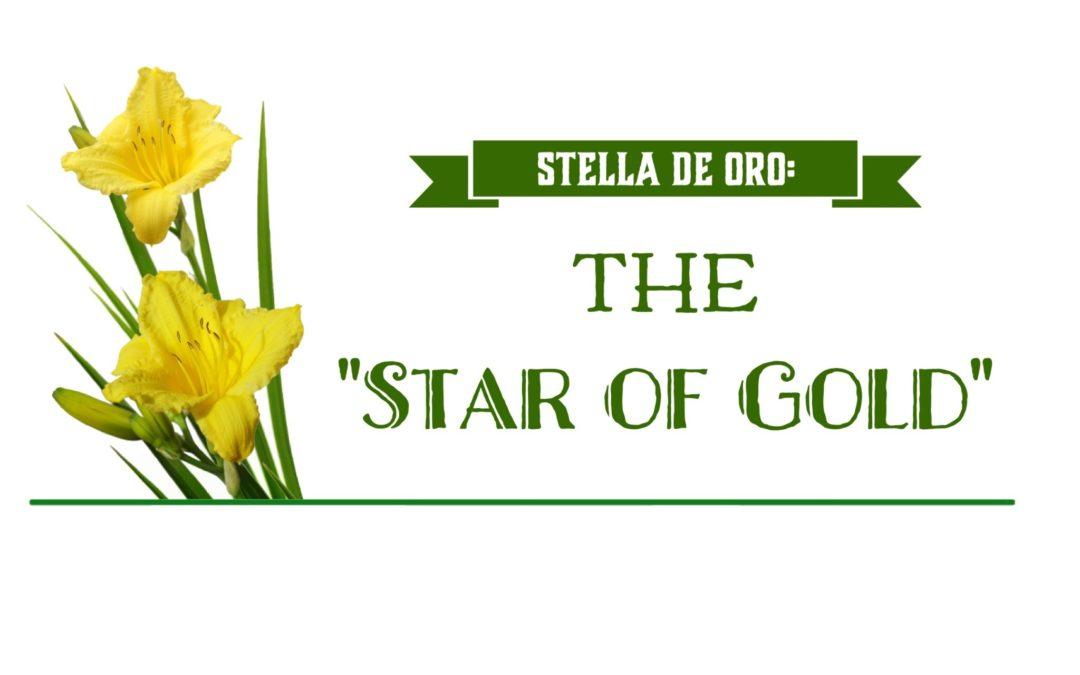 Stella De Oro: The Star of Gold