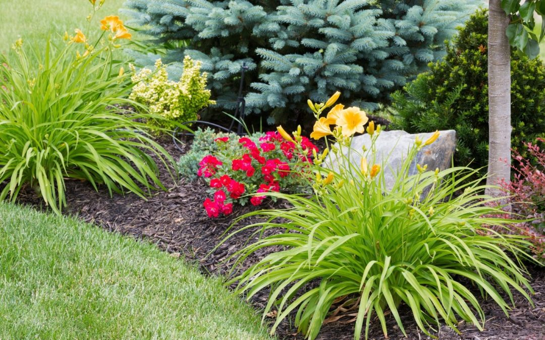 Get Ready … Get SET … It's Daylily Planting Time: Here's How to Prepare Your Beds