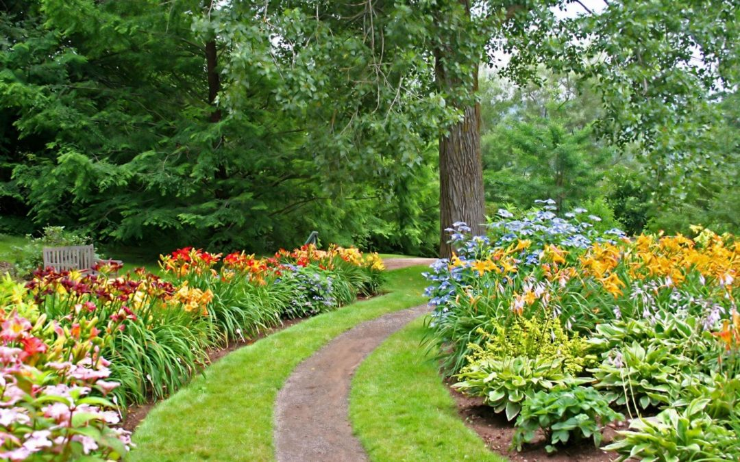Create a Haven for Pollinators with Beautiful Daylilies
