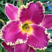 Purple Desire