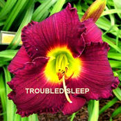 Troubled_Sleep